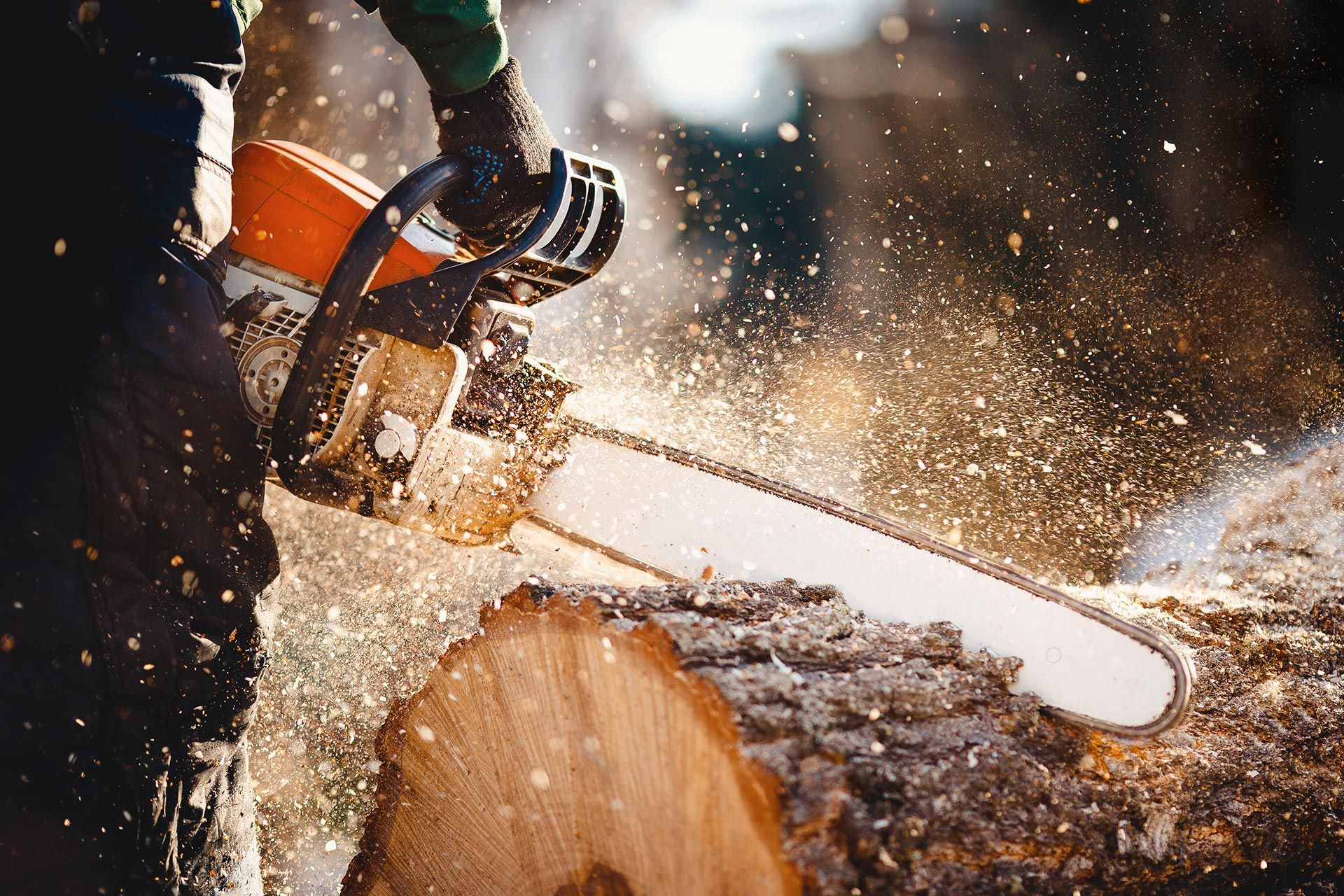 Chainsaw and Tree Felling Training